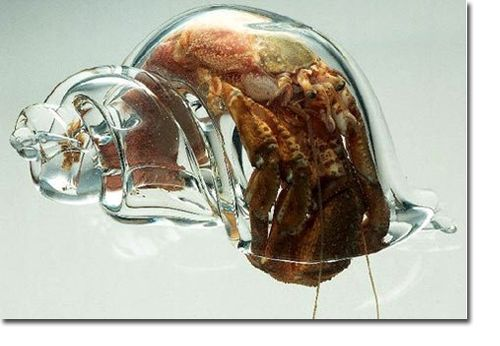 HERMIT_CRAB_GLASS