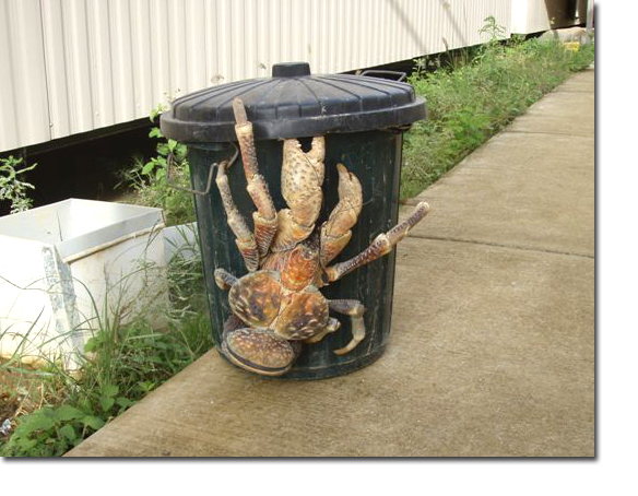 MONSTER_COCONUT_CRAB
