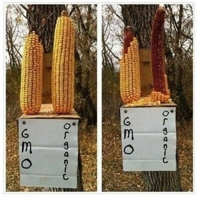 GMO_SQUIRREL_TEST